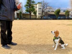 コマンドに従う犬
