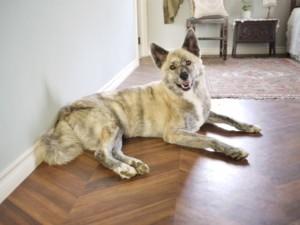 犬の室内環境